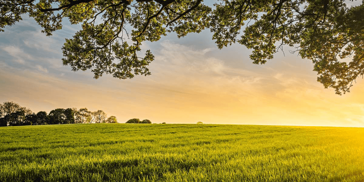 farm land for investing