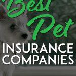 Cute puppy best pet insurance companies pinterest pin