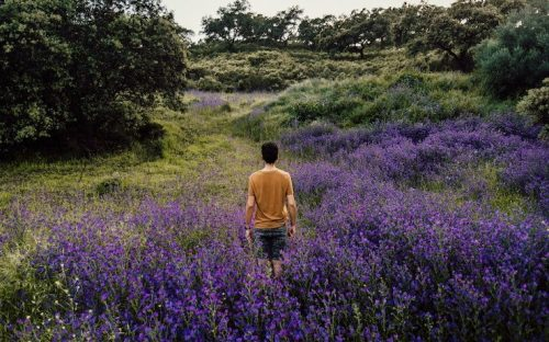 Man walking in field of purple flowers