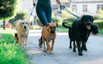 image walk dogs